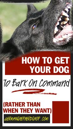 German Shepherd Dogs How To Teach your Dog To Bark On Command German Shepherd, German shepherds, german shepherd training, german shepherd tips German Shepherd Training, German Shepherd Puppies, German Shepherds, Dog Training Books, Dog Training Tips, Training Plan, Potty Training, Dog Clicker Training, Most Popular Dog Breeds