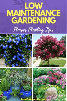 Flower Garden Learn beginning gardening tips to make flower purchasing and planting easy. Find ideal flowers and plants and create a no-fuss garden. Hydroponic Gardening, Organic Gardening, Vegetable Gardening, Indoor Gardening, Container Gardening, Urban Gardening, Hydroponics, Garden Pests, Garden Tools