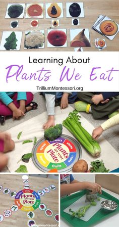 Plants We Eat - Trillium Montessori Preschool activities for learning about parts of plants and edib Preschool Food, Montessori Preschool, Preschool Lesson Plans, Preschool Activities, Nanny Activities, Preschool Curriculum, Maria Montessori, Spring Activities, Preschool Learning