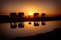 Fantastic Photo of Elephants at Sunrise in Serengeti, Africa