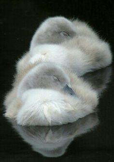 Fuzzy little sweetness