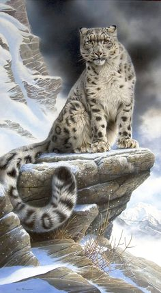 snow leopards wth wings  paintings | Snow Leopard is sitting on rock by ~nickel8 on deviantART