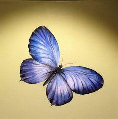 blue butterfly :: acrylic on canvas