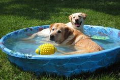Pool party! Labs