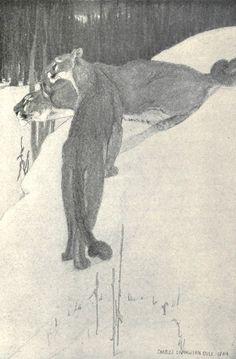 2 mountain lions: Charles Livingston Bull.