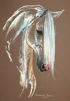 Andalusisches Pferd von Paulina Stasikowska Andalusian horse by Paulina Stasikowska – Horse Drawings, Animal Drawings, Art Drawings, Drawing Art, Drawing Ideas, Pastel Art, Equine Art, Horse Pictures, Horse Art