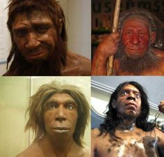 """The homme de Spy (""""Man from Spy"""") (boris doesborg/ CC BY NC SA 2.0 ), and other reconstructions of what Neanderthals may have looked like: at the Neanderthal Museum in Mettmann, Germany (Stefan Scheer/Stefanie Krull/ CC BY SA 3.0 ), in the Museum für Naturkunde, Berlin, Germany (כ.אלון/ CC BY SA 3.0 ), and in Zagros Paleolithic Museum, Kermanshah (Rawansari/ CC BY SA 3.0 ) These are some of the stereotypical interpretations of Neanderthal appearance."""