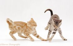 Cat And Kittens With Captions - - Orange Cat Names - - Warrior Cats, Fox Dog, Dog Cat, Cat Anatomy, Cat Reference, Cute Baby Cats, Cat Pose, Curious Cat, Cute Animal Pictures