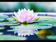 6 Hour Relaxing Meditation Music: Soothing Music, Healing Music, New Age Music, Chakra ☯2694 - YouTube