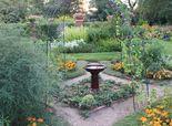 'Waffle' gardens save water