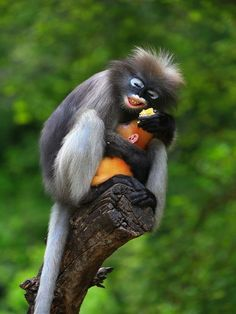 Monkey - lovely photo