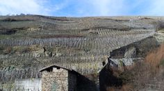 Terraces of vineyards in the French wine region of Cote Rotie in the northern Rhone Valley. Photo / Wikimedia Commons image posted by user Karen