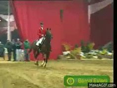 …well…this is just plain awesome and amazing | Community Post: 6 GIFs Of Horses Jumping Cars