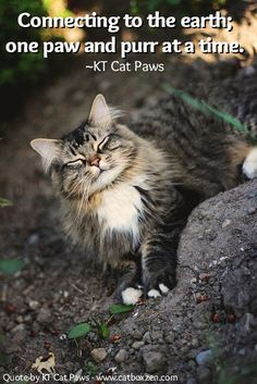 143 Best Quotes By Kt Cat Paws Images Cat Paws Cute Kittens