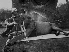 Resuelto el misterio de los leones que devoraron a 35 hombres