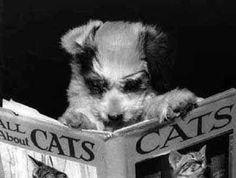 The Reader Who Wants to Expand His Horizons | 15 Types Of Readers, As Told By Cats And Dogs