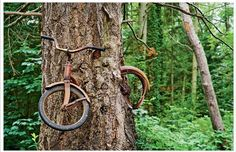 Tree growing around an abandoned bicycle