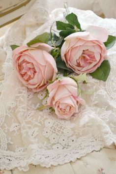 Ana Rosa ~ Roses and Lace ~ Love Rose, Pretty Flowers, Pretty In Pink, Romantic Roses, Beautiful Roses, Pink Roses, Pink Flowers, Deco Rose, Raindrops And Roses