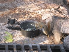 You never know who will join you for dinner in the Boundary Waters Canoe Area Wilderness!
