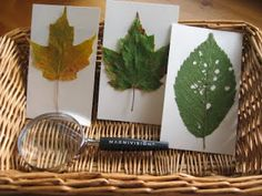 The Wonder Years: Montessori;studying leaves with magnifying glass