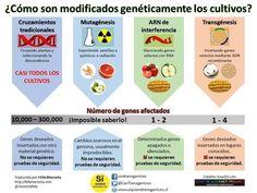 ¿Cómo son modificados genéticamente los cultivos?: