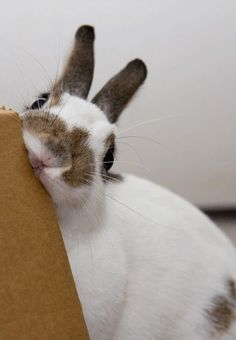 Bunnies love to nibble on cardboard & paper.