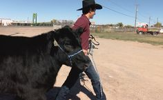 New Mexico students raise heifers for college scholarships - KRQE News 13 #college #collegestudents