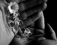 Luci di poesia: Come un fiore