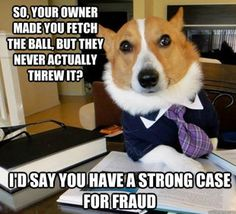Corgi Lawyer! Ha, this would totally be Simon... and the client would be Purl, for sure!