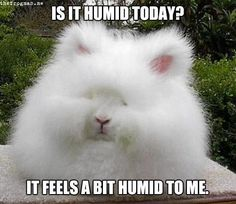 This is how I often feel when my curly hair takes on a life of it's own since moving to the south.