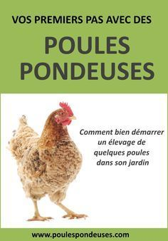 Alimentation pour vos poules: Comment bien nourriture vos poules pour obtenir de beaux oeufs? | Guide gratuit pour élever ses poules dans son jardin