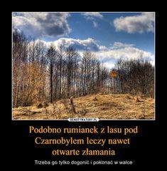 Podobno rumianek z lasu pod Czarnobylem leczy nawet otwarte złamania Scary Funny, Wtf Funny, Hilarious, Funny Photos, Funny Images, Polish Memes, Funny Mems, Everything And Nothing, Life Humor