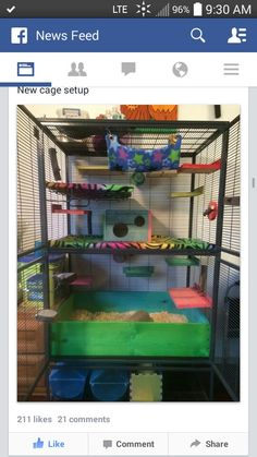 I think I like a setup like this for my rats. I want to do bedding again, I've only ever done fleece in my critter nation. It's getting annoying