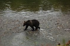 What to do when confronted by a bear