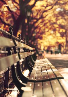 Old friends, sat on their park bench like bookends, newspaper blown through the grass lands on the round toes of the hard shoes of the old friends ~ Can you imagine us years from today, sharing our park bench quietly?