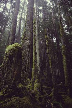 суровый, таинственный, грозный лес, что то сказочное, но страшной сказки