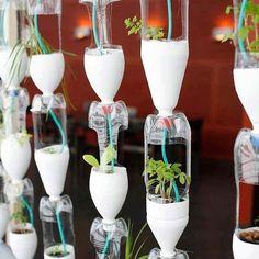Hortinha feita com garrafas Pet, demais né?! 🍃🍂 #ahlaemcasa #horta #garrafapet #reciclagem