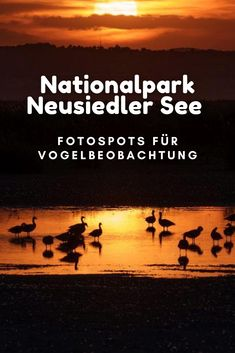 #neusiedlersee #urlaub #Österreich Aussichtstürme und Plattformen im Neusiedler See Nationalpark | Vögel Lofoten, Movies, Movie Posters, Outdoor, Viajes, Birdwatching, Perfect Photo, Outdoors, Films