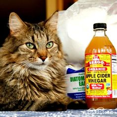 How To Get Rid Of Hairballs Naturally