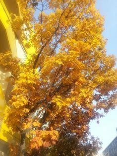 Autumn at Tempo Hotel Bucharest