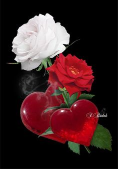 God, please let audrey see that trying is the only way we will know and to prove to her we were ment for each other. Good Night Love Images, Love Heart Images, Love You Images, Love Pictures, Flowers Gif, Beautiful Rose Flowers, Glass Flowers, Love Flowers, Heart Wallpaper