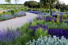 lavender and gravel path
