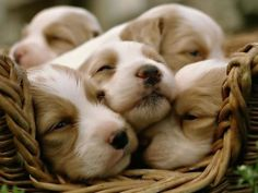 Which Puppy Matches You Best?
