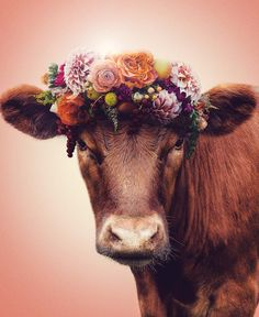 Animal ethics vegetarianism eating meat {totschool and preschool} farm animals theme Cute Baby Cow, Baby Cows, Cute Cows, Cute Baby Animals, Farm Animals, Animals And Pets, Funny Animals, Beautiful Creatures, Animals Beautiful