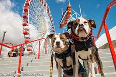 Two Pitties in the City: City Dog: On Finding Things to Do with Our Dogs