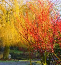 Shades of red and yellow in the beautiful grounds of Hodsock Priory