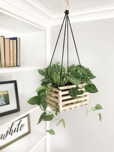 44 DIY Hanging Plants Ideas for Your Home – is creative inspiration for us. 44 DIY Hanging Plants Ideas for Your Home… Continue Reading → Indoor Planter Box, Hanging Planter Boxes, Window Hanging, Diy Hanging Shelves, Planter Ideas, Hanging Basket, Hanging Plant Diy, Large Diy Planters, Plant Hanger Diy
