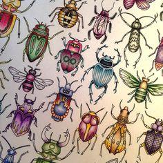 Beetles #secretgarden #secretgardencoloringbook #colouringforadults #johannabasford #johannabasfordsecretgarden#polychromos #fabercastellpolychromos