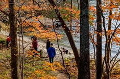 Virginia State Parks - It's never too early to plan that fall getaway. Here are four lakes we know you'll love this fall at Virginia State Parks. Changing Leaves, State Forest, Fall Is Here, Sport Fishing, Science And Nature, State Parks, Places To See, Virginia