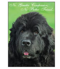 "Front of card features a beautiful photograph of Sue Putt's Newfoundland - ""Glory"", as well as the following text: ""No Greater Companion, No Better Friend..."". The inside of the card says: ""May your m"